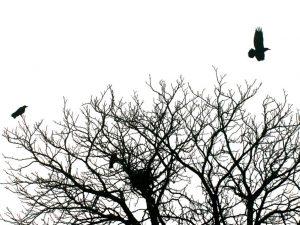 Cuervos, desolación y leche